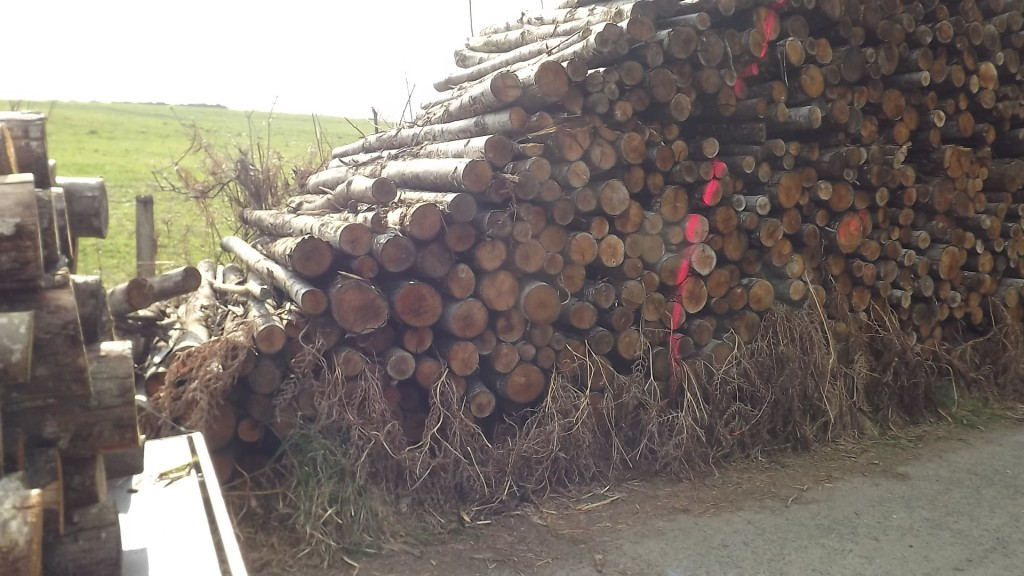 Hout (19)