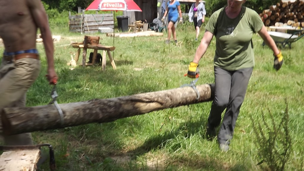 moving the logs
