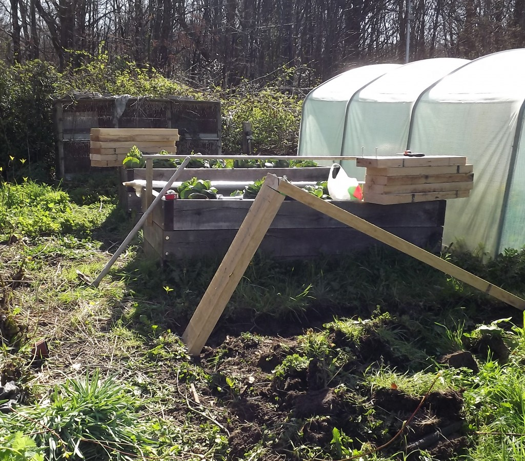 Raised Beds (1)