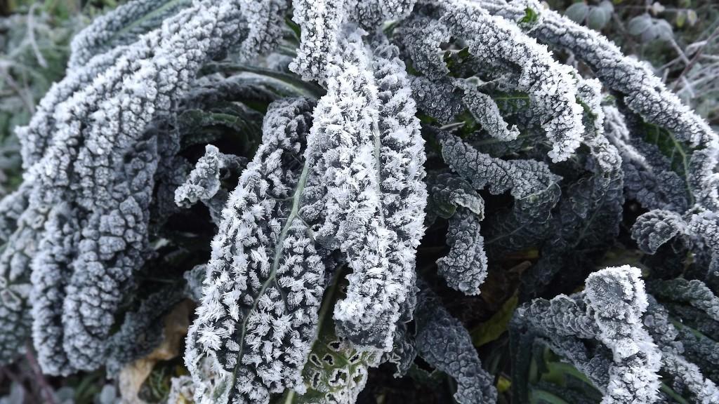 Frost on Nero di Toscana