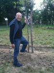 Harvey's Tree